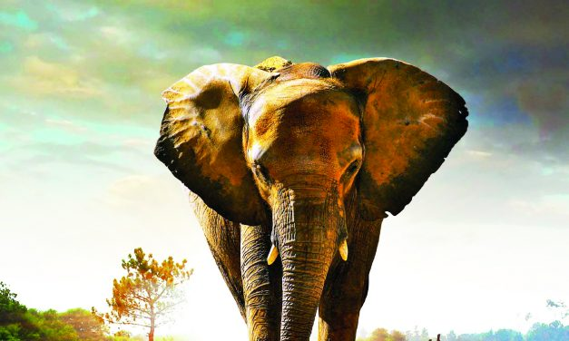Protected: Walking with Elephants Video