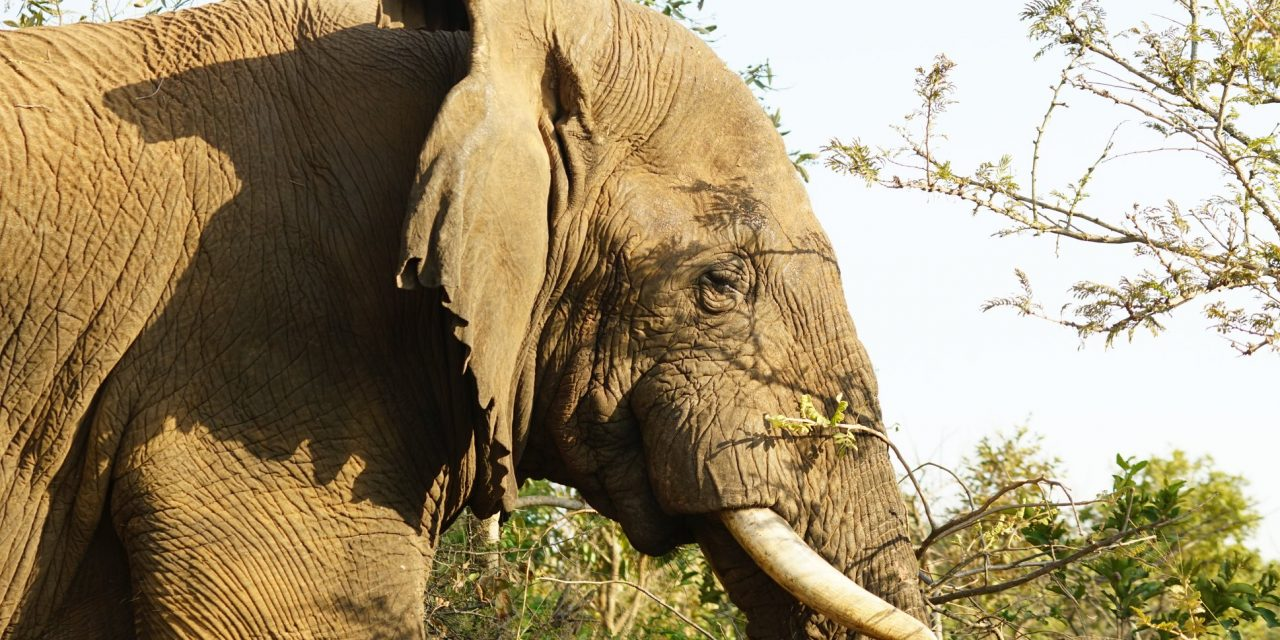 Walking With Elephants, Filming Update from East Africa.