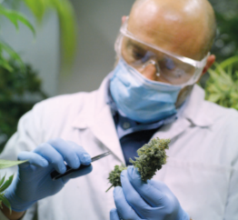 Medicaleaf Scientist with Plant